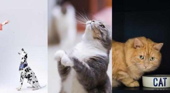 我爱方案网上架宠物智能喂食器Wi-Fi+BLE双模方案 ,低成本免开发App可定制